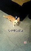 ☆チワワ大好き☆in☆板橋区