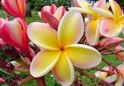 ***ハワイの香り***