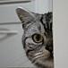 猫を見たことがある