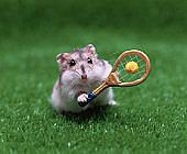 福島市テニスサークル(硬式)