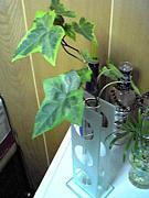 観葉植物との生活