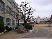 大阪市立北恩加島小学校