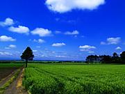 北海道の自然環境を学ぶ会