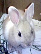 うさぎ専門店 Rabbit Wish