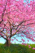 名前に桜の漢字がつく人!