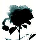 廃人黒薔薇族