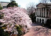 青山学院総合文化政策学研究科