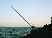 磯の大物釣り限定