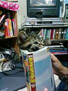 猫にまつわるetc.