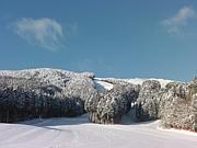 県森の雪に恋してる