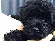 〜MY LO☆VE DOG〜