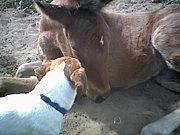 馬の交流会