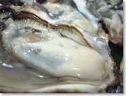 人生とは牡蠣で満ちている