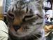 (愛知)尾張・三河の猫好きさん
