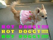 【Hot Doggy】