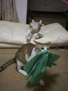 Lisa家の猫日記