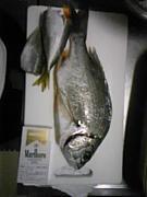 紀州釣りについて