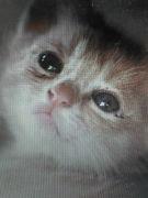 ネコになりたい。