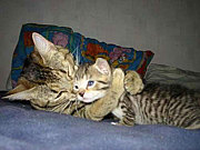 抱きついたまま眠りたい