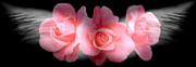 【Rose】