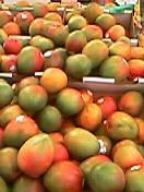 珍しい果物部