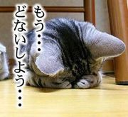 ☆夢への努力☆