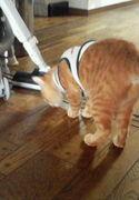 ネコ大運動会。ネコ自慢。