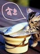 魚がスキなんです・・・2