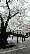 東京工業大学4類1組(2010年度)