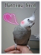 鳥の居る生活