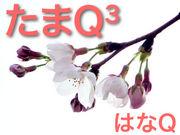 ����Q