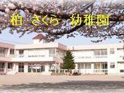 柏 さくら 幼稚園