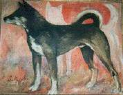 四国犬(日本犬)