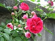 ROSE GARDEN リレー小説の庭