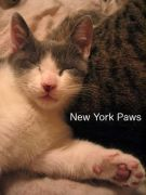 New York Paws