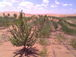 砂漠緑化活動(環境問題)質問箱