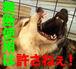 愛犬写真の著作権と肖像権を守る