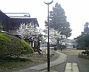 啓明学園 八王子バス