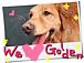 I ♡ ゴールデン&大型犬