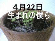 4月22日生まれの僕ら