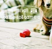 viva!!came-ko&came-o