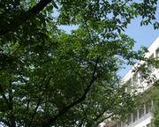 夙川学院短期大学 美術科