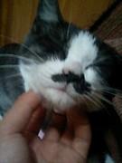 猫を可愛がっている自分が可愛い