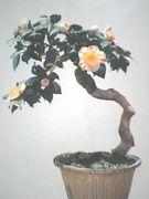「椿盆栽」