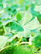 fresh-green♪