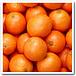 坂道でオレンジを転がす会