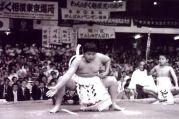 english sumo conversation