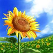 夏の歌(summer song)