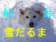飲んで飲まれて雪だるま仙台支部