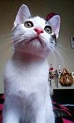 哺乳類のピンク鼻ラブ